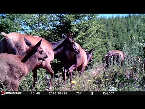 2015 Oregon Trail Camera Highlights