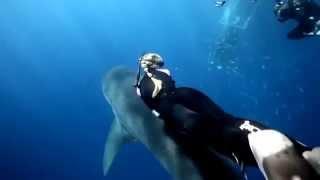 Elle nage avec un grand requin blanc !