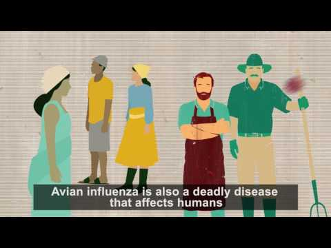 Using Nuclear Science in the Control of Avian Influenza