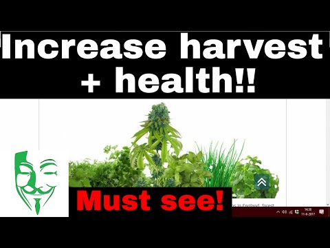 MUST SEE!! For every Autoflower and Non Autoflower grower - INCREASE the Harvest and health!