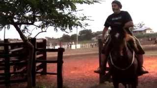 Laço comprido e Cavalo crioulo - Tradição e paixão do verdadeiro gaúcho