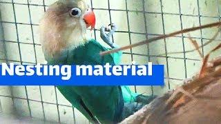 Nesting material details for birds/ How to provide nesting material to birds