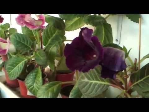Уход за растением Орхидея -