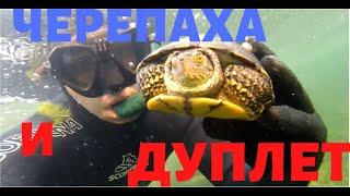 Подводная Охота Дуплет и Черепаха