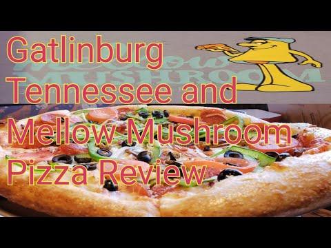 Mellow Mushroom Review And Gatlinburg Tennessee Fun