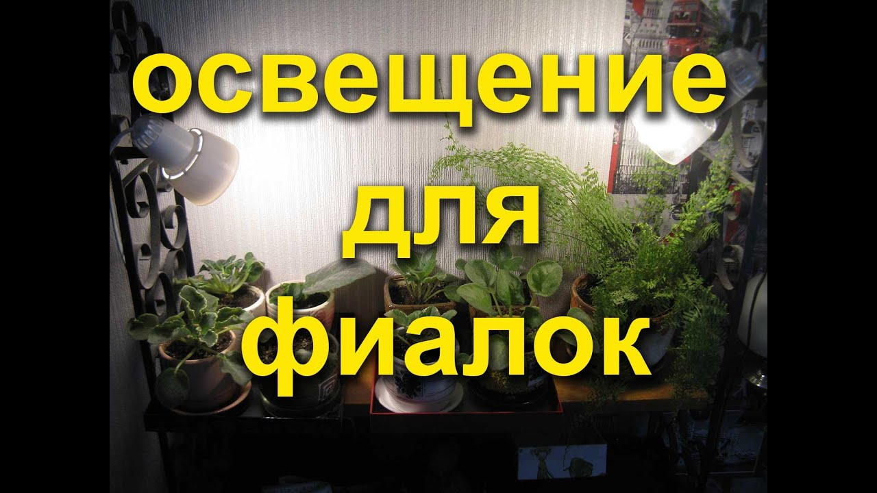 Мои растения. Про стеллажи,подсветку и немного о моей истории .