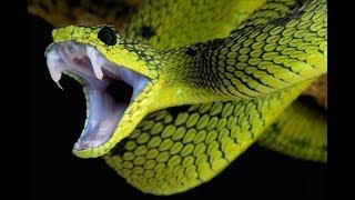 Как избежать укуса змеи?