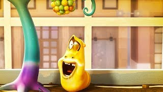 LARVA - STRANGE BERRIES | Cartoon Movie | Cartoons For Children | Larva Cartoon | LARVA Official