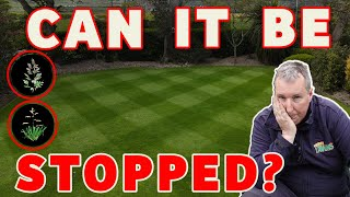 The BEST way t๐ stop weed grass in a lawn | NEW lawn is covered in weed grass *fix an ugly lawn*