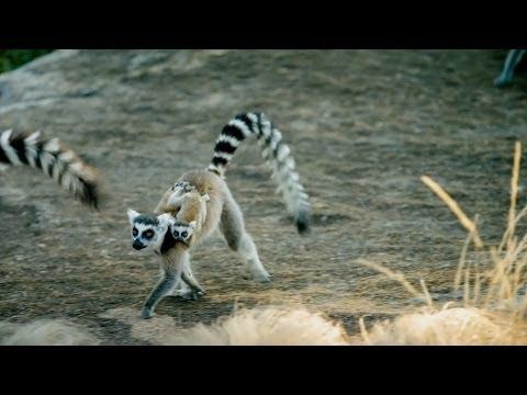 Island of Lemurs: Madagascar - TV Spot 1 [HD]