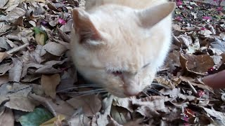 頭を撫でてやったら涙を流した野良猫 thumbnail