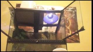 How to setup a  18x18x18  crested  gecko  terrarium