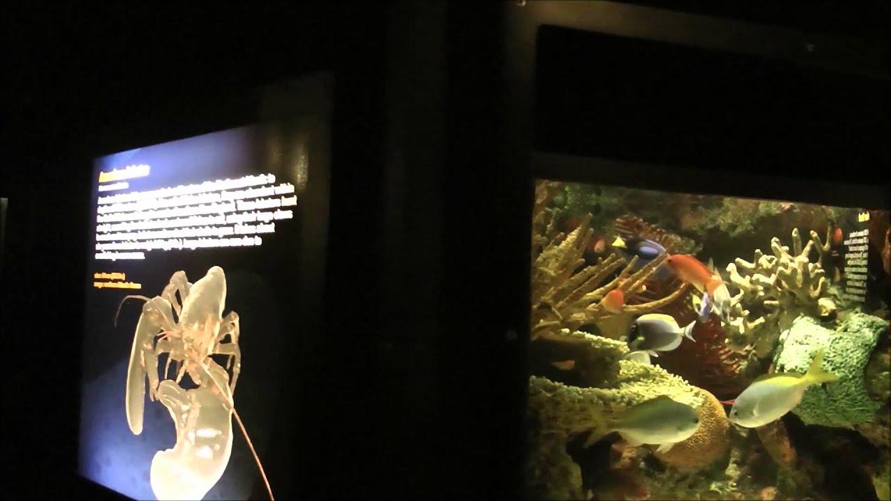 Aquarium de la mer seaworld san diego youtube for Aquarium de mer