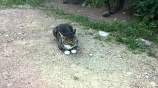 Песни котов. Часть 3