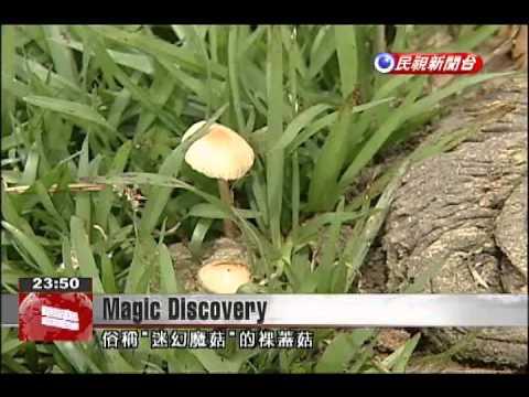 Surprise for man who unwittingly finds magic mushrooms in Yangmingshan