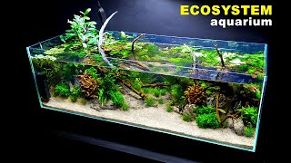 HOW TO: ECOSYSTEM AQUARIUM, NO WATER CHANGES | Full Step By Step Tutorial | MD FISH TANKS