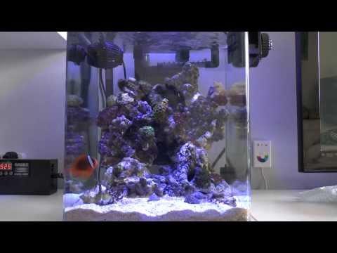 35L Nano Reef HD (Cyprus)