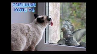 Приколы с кошками и котами #5. Подборка смешных и интересных видео с котиками и кошечками 2017