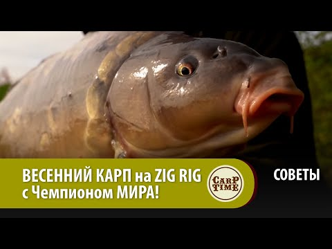 ВЕСЕННИЙ КАРП на ZIG RIG  с Чемпионом МИРА! СОВЕТЫ