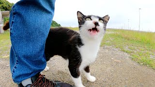 可愛い鳴き声と激しいスリスリで甘えてくるハチワレ猫