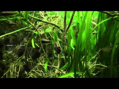 Wilhelma Stuttgart: Das Aquarium-Terrarium - Tropisches Süßwasser (06.05.2014)