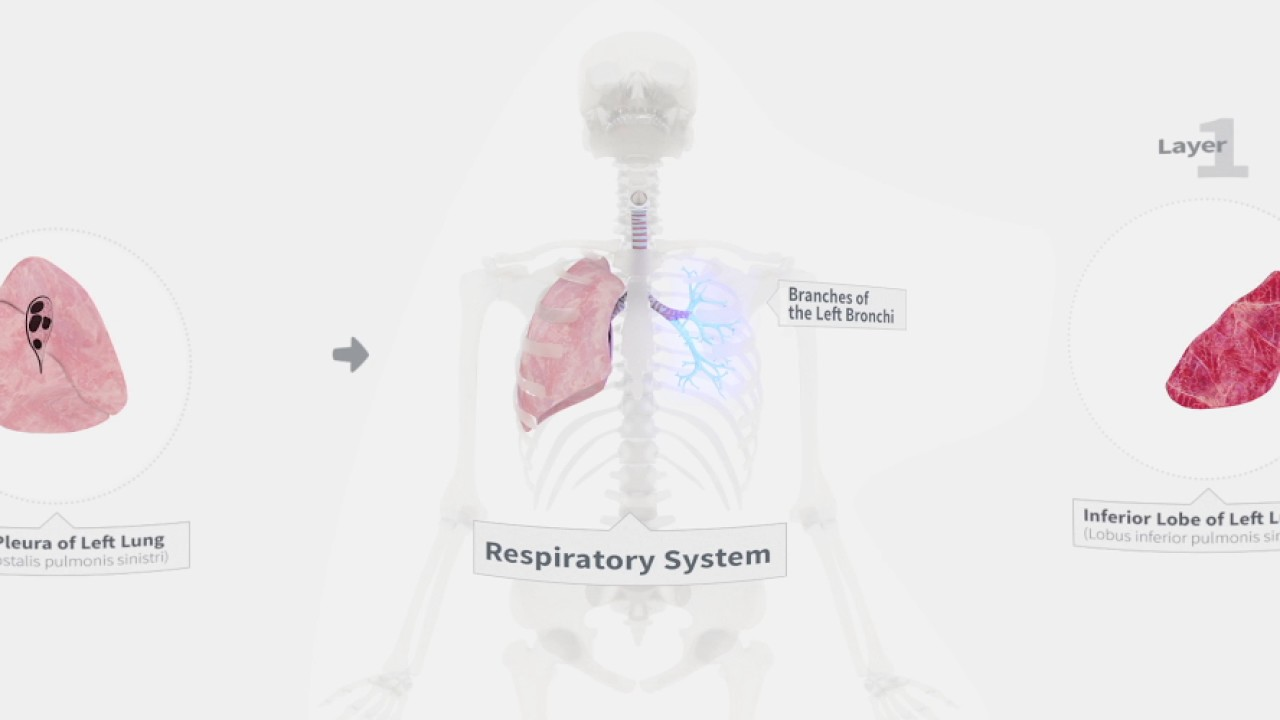 Explore The Lungs In 360 Degrees Youtube