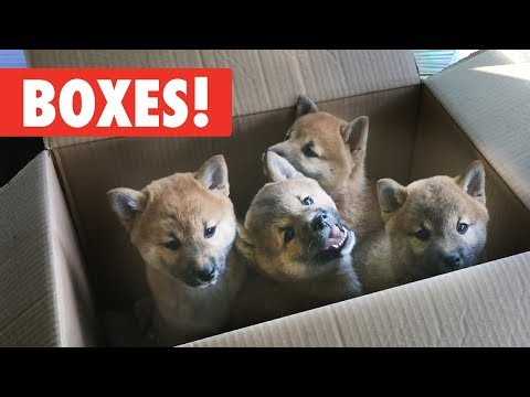 Animals Who Love Boxes!