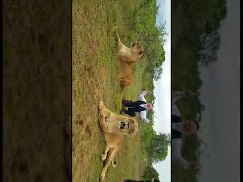 Meshi-Zahav on S. Africhan safari (Media Resource Group)
