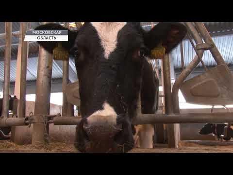 Молочная ферма в