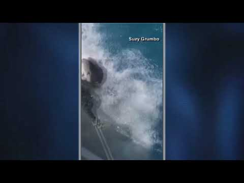The Mo & Sally Show - Shark Snatches Bait From Boat's Bait Bag In The Florida Keys