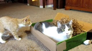 Purr-Packs Unboxing -  November Cat Subscription Box Review thumbnail