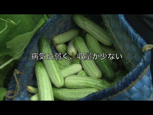 映画『よみがえりのレシピ』予告編