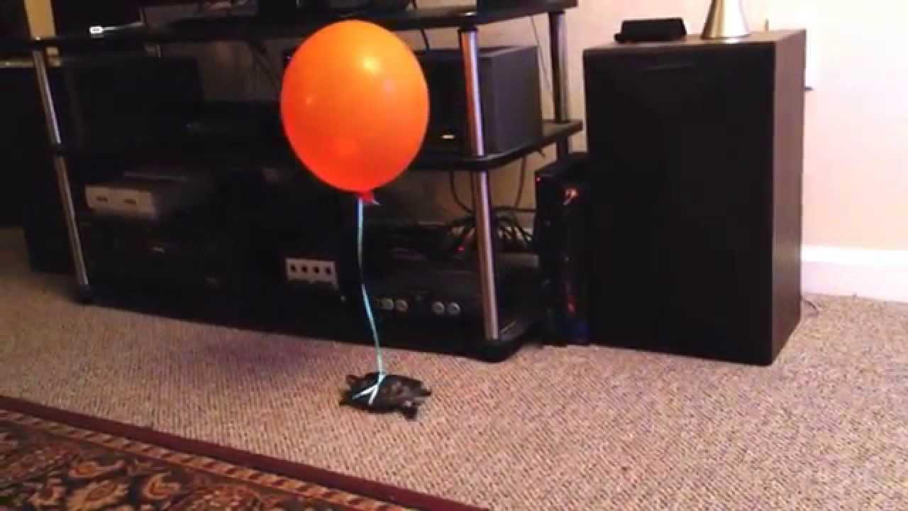 Afbeeldingsresultaat voor turtle balloon