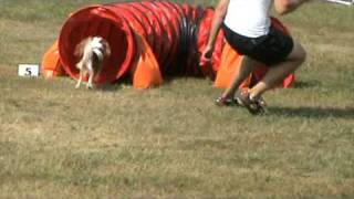 Une Etoile Filante Cavalier King Charles Spaniel Manche 2 Jumping Cat A