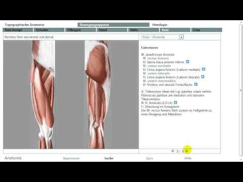Anatomie: Untere Extremität Muskeln 9/11 (Grobe Übersicht!) - YouTube