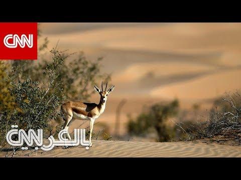 أبوظبي في فصل الشتاء والعطلات.. إليك 4 نشاطات وسط الطبيعة  - 19:59-2020 / 1 / 12