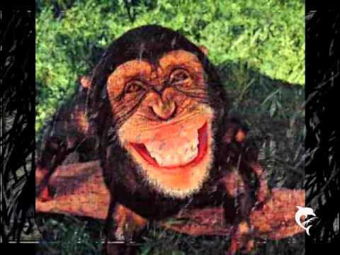 Ghymes - Majomország - Monkey Country