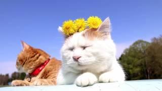 http://ameblo.jp/nosenekoshiro/entry-12271229851.html のせ猫オフィ...
