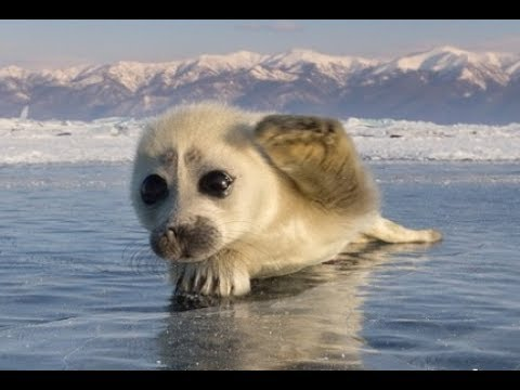 Cutest Wild Baby Animals Ever
