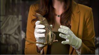 The Debrief: Behind the Artifact - Dead Drop Rat