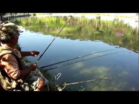 Pesca de tilápia no pesqueiro Alpes da Cantareira