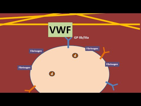 Platelets and Von Willebrand Factor animation