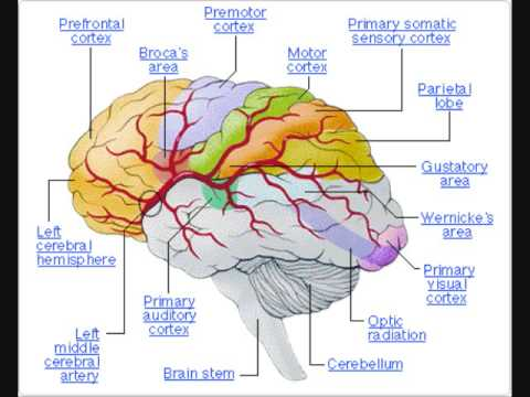 Medicine that improves brain function picture 5