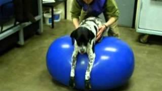 Canine Rehabilitation - Jessica Rychel Dvm, Cvma, Ccrp