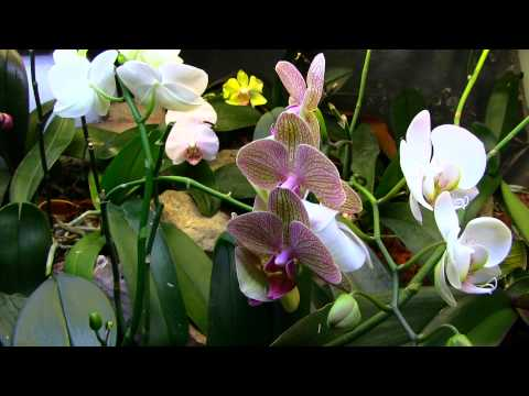 orchidarium doovi. Black Bedroom Furniture Sets. Home Design Ideas
