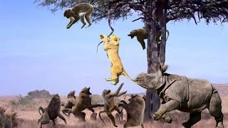 4 Lion vs Baboon - Monkey Rescue Mouse From Snake hunting, Lion vs Anaconda vs Deer, Wild Boar