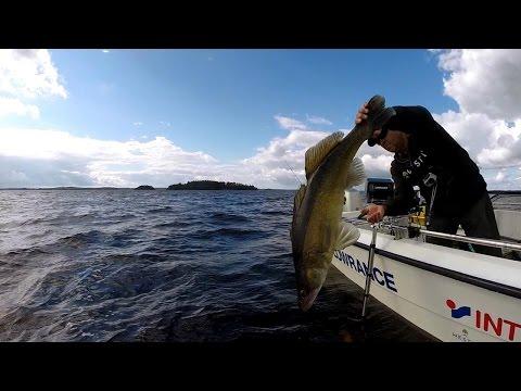 Pelagic zanderfishing 2014