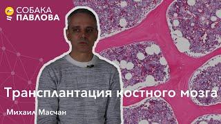 Трансплантация костного мозга - Михаил Масчан // рецедив лейкоза, аферез, безопасность донора