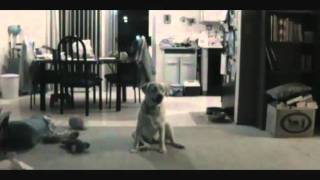 Funny Dog Learning To Catch