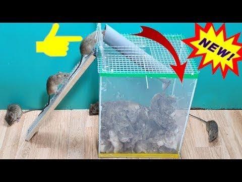 Perangkap Tikus DIY Terbuat Dari Pipa Pvc / Cara Terbaik Untuk Menjebak Tikus Dari Pipa Plastik